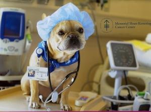 Dog Doctor253