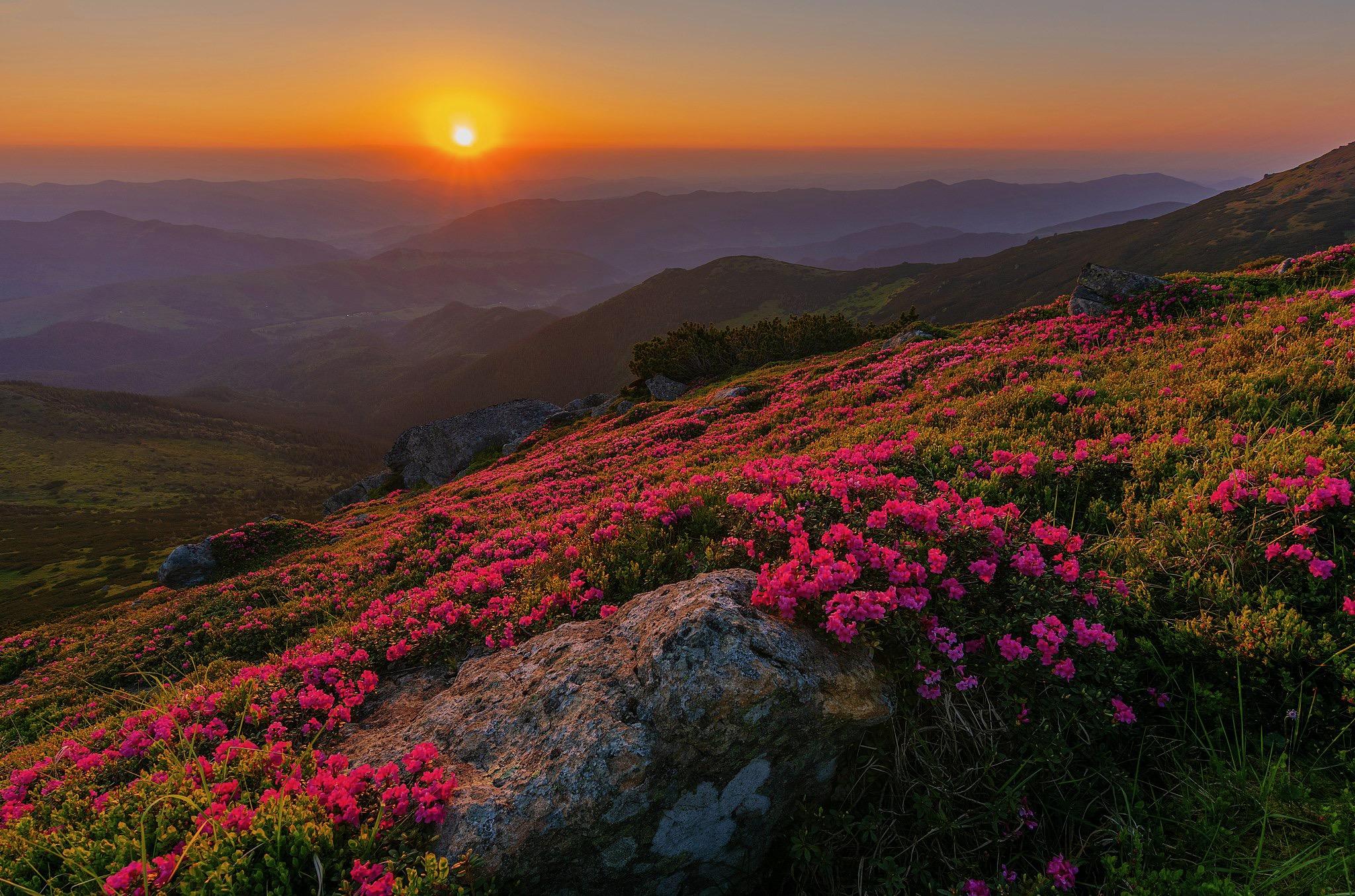 ододендронний-світанок-на-Вухатому-Камені
